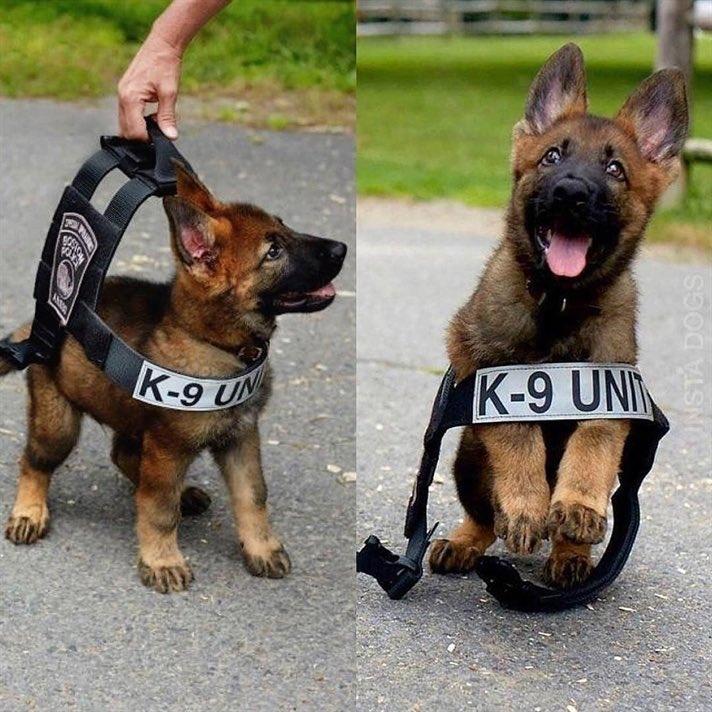 警察の犬め!  📷