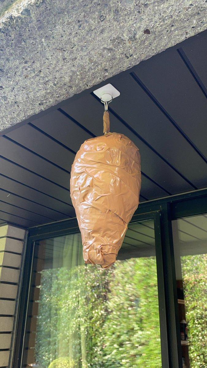 アシナガバチが5匹ぐらいで巣を作る場所の下見に来てたので、例のダミーの蜂の巣を作って吊るしたら1日で居なくなった