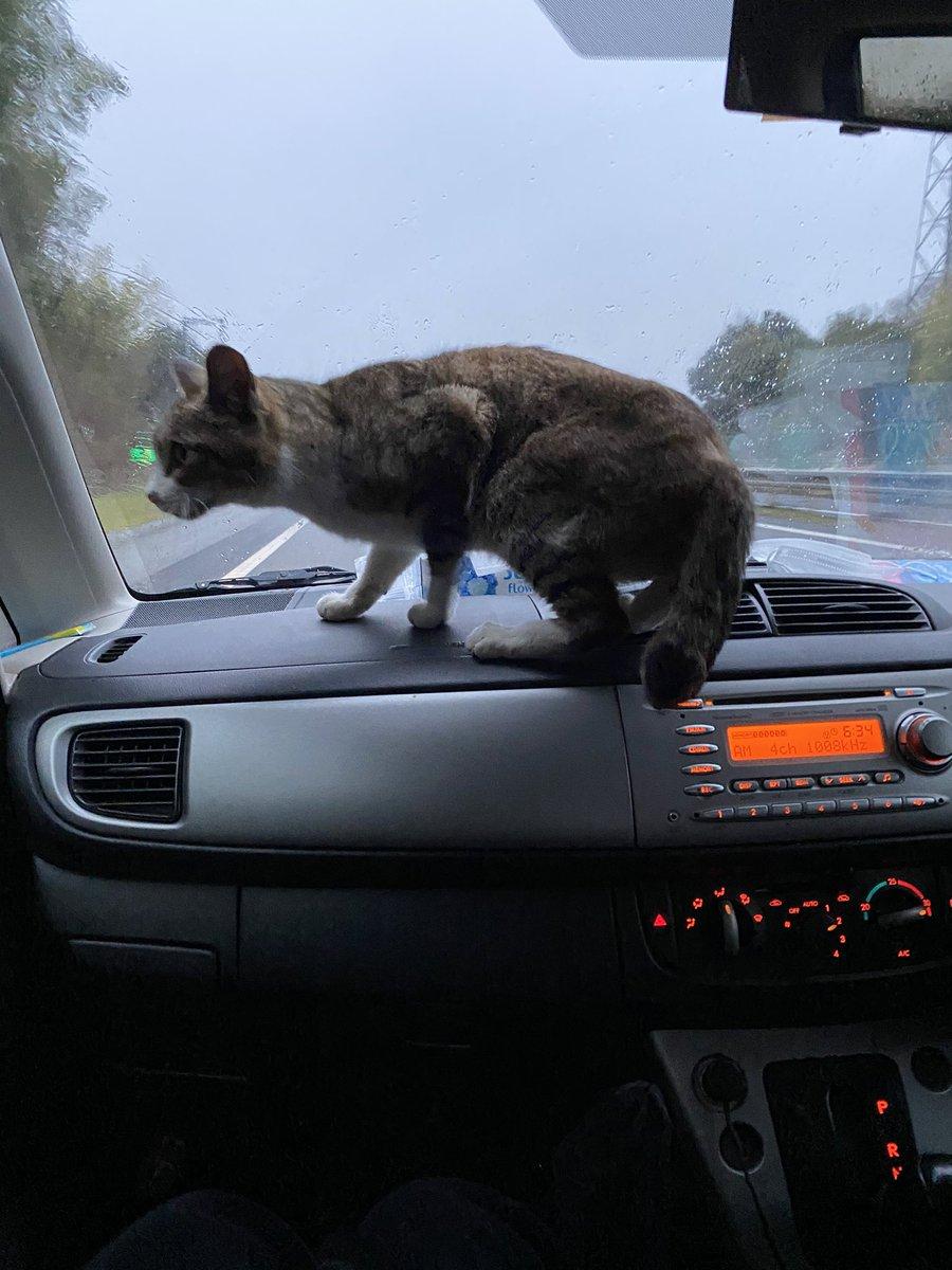 会社の車の後ろからいきなり猫出てきたんだけどwwww