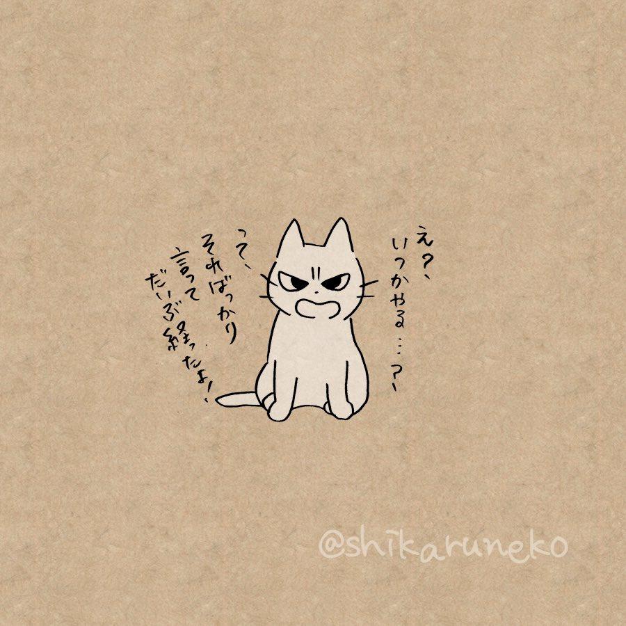 自炊しようと思いつつできてない人を叱ってくれる猫