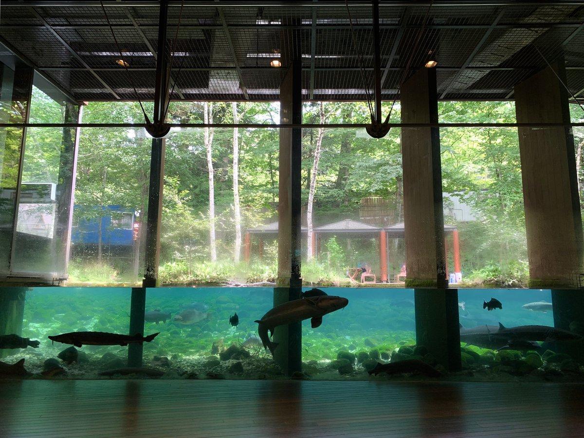 忍野八海のすぐそばにあるのに意外と知られていなかったりする、森の中の水族館