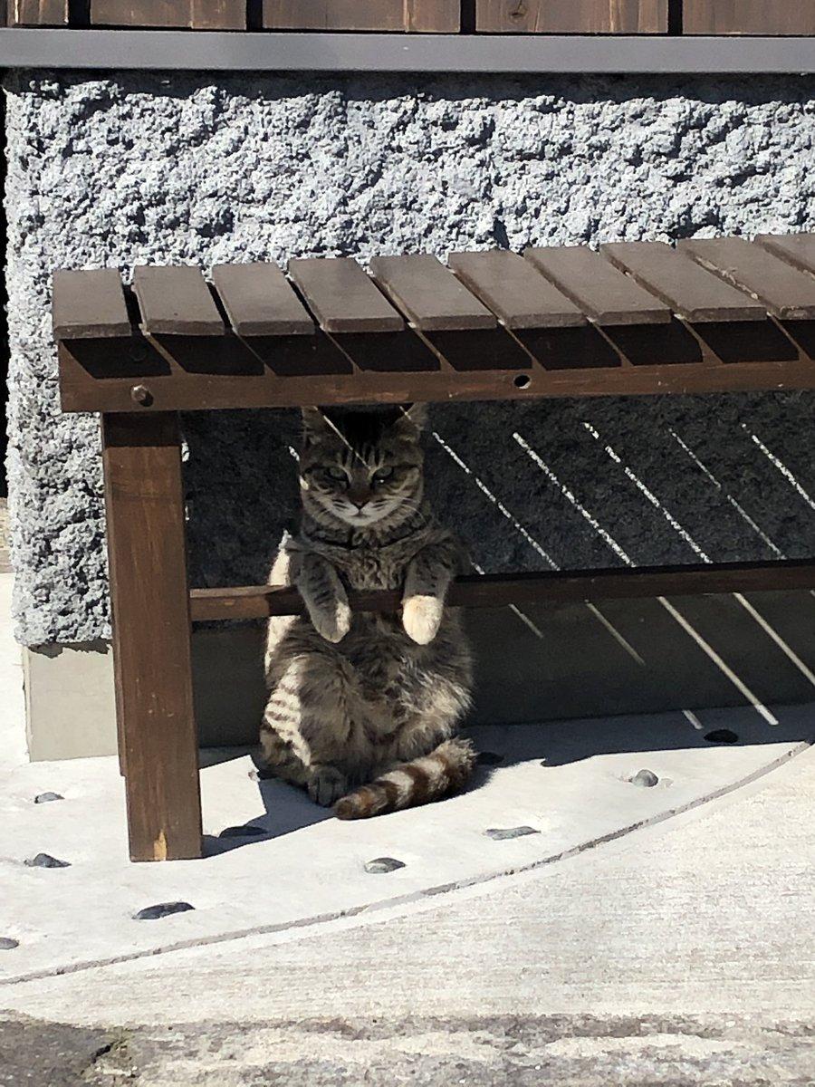 相当可愛い猫いたんだけど!!??
