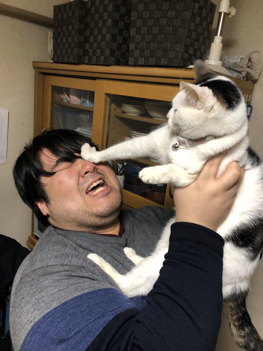 222だから実家の猫が嫌そうな顔してる写真置いときますね4