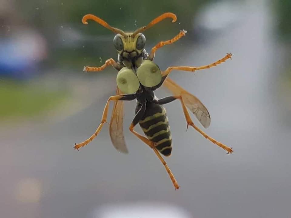 いやー、夏になって鈴虫の鳴き声が風情あっていいですねぇ...  うわーーーーーーーーー