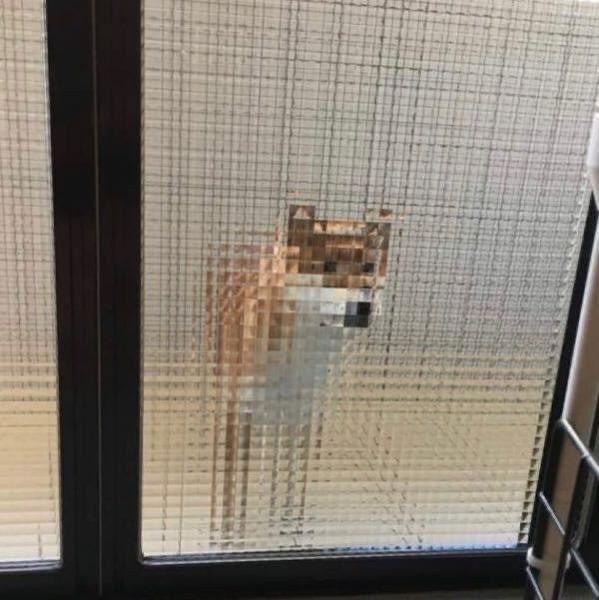 マインクラフトみたいな犬
