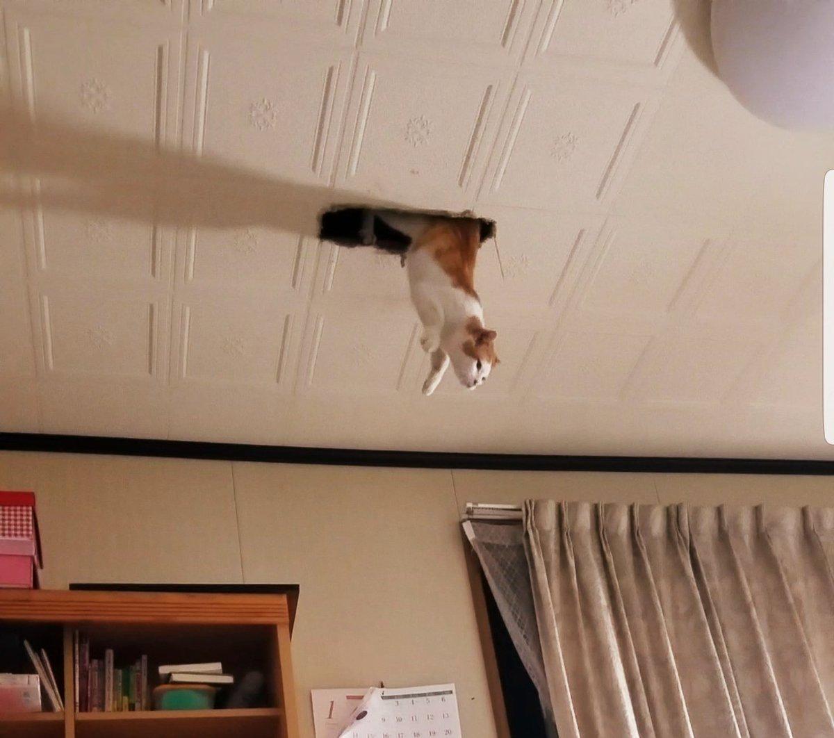 実家の猫わらう