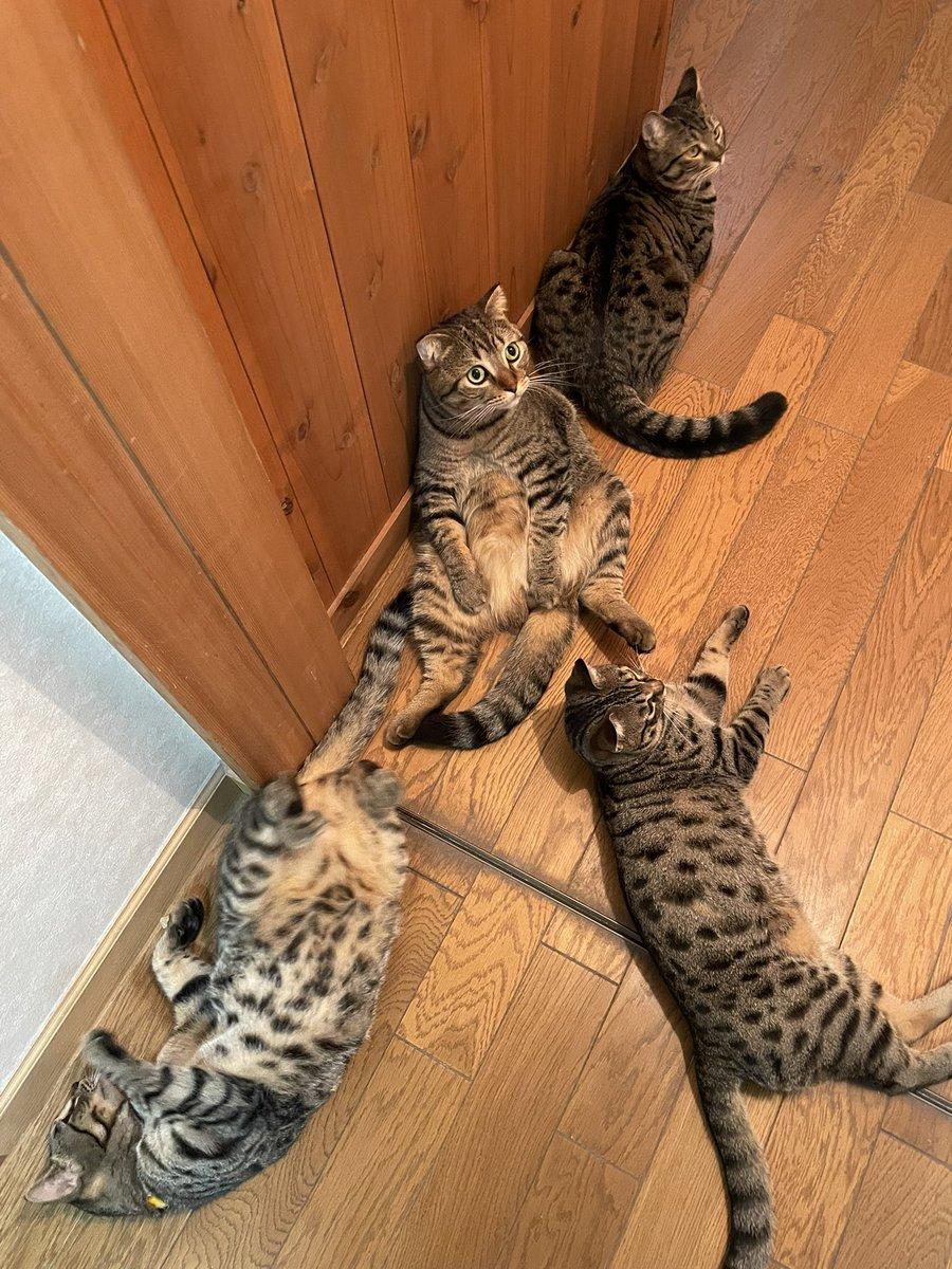 人という字は猫と猫が支え合ってもできます #世界猫の日