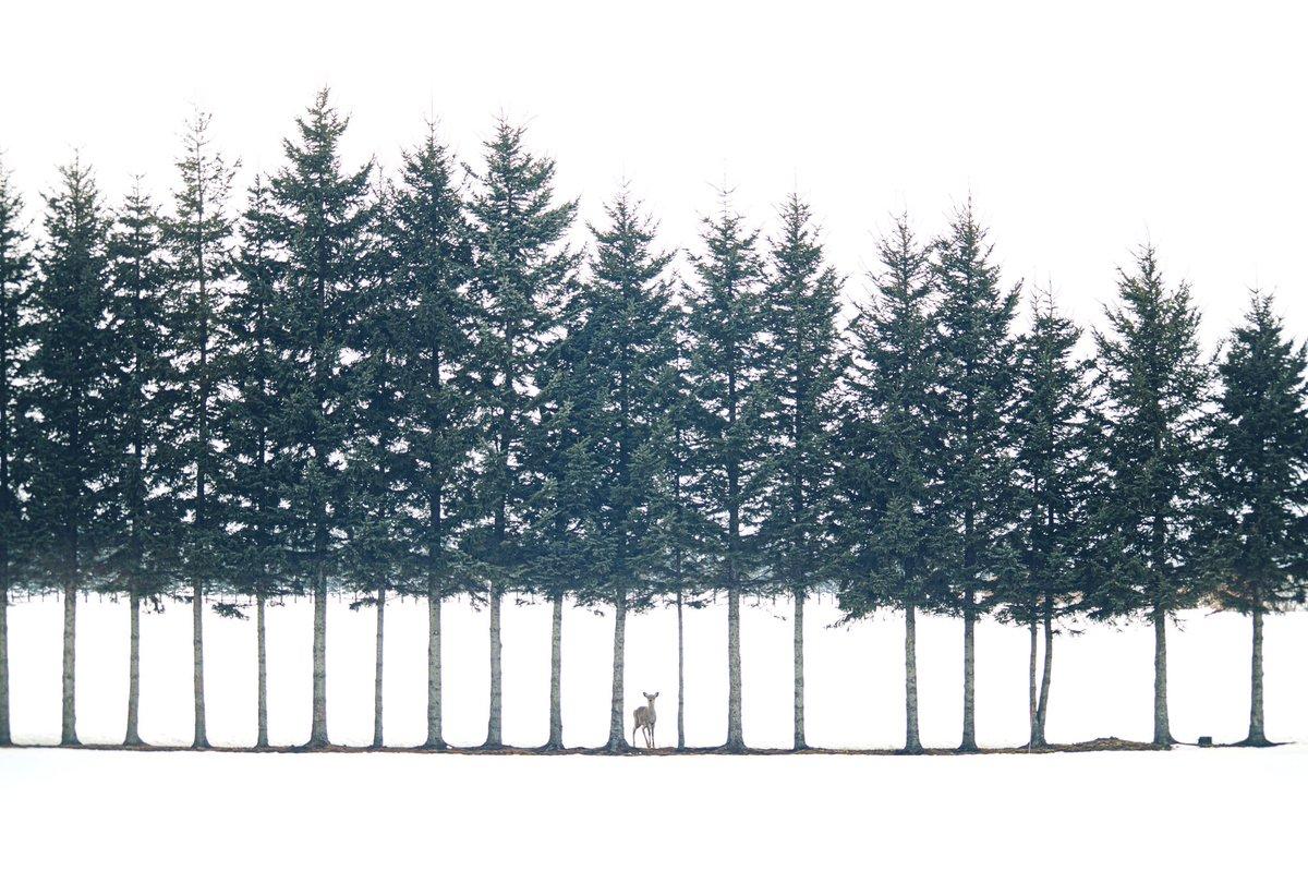 絵に描いたような写真が北海道で撮れた。