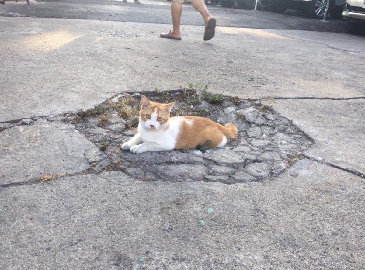 敵に殴られた犬と身体を重くされた猫