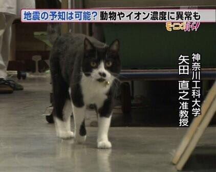 ご近所のこのネコ、どこかで見た気がしていたが神奈川工科大学の矢田直之准教授では