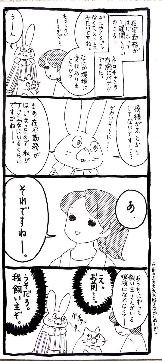 【うさぎ】「ネコチャンのおうちに住まわせてやっているニンゲンが、最近毎日いる
