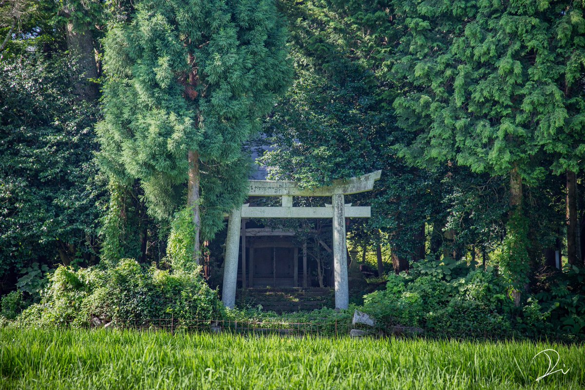 『トトロの森』 京都の山奥にある、小さな神社と鎮守の森
