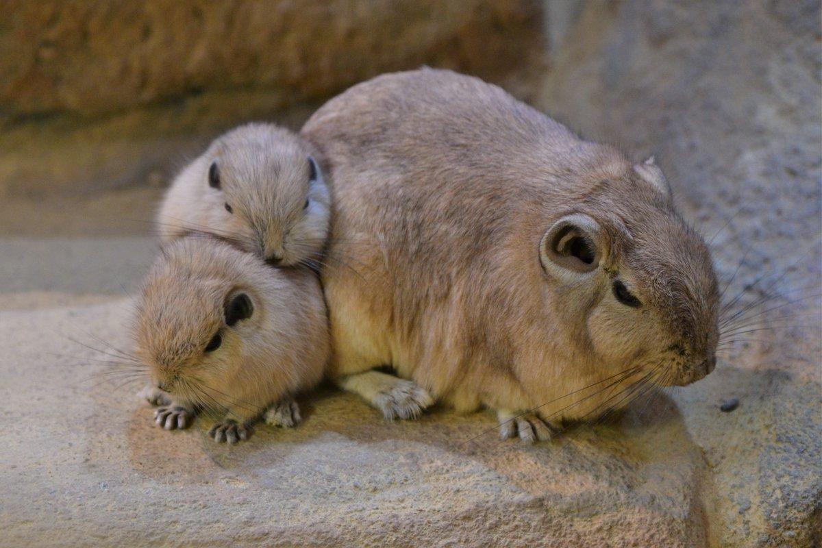 岩の隙間で家族同士くっつきあう習性があるそうで、いつも団子状態でした☺️