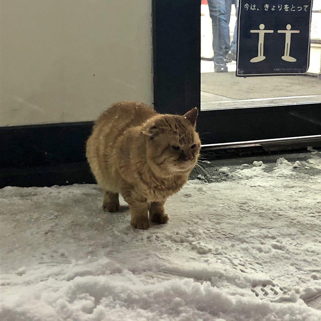 コンビニの前で雪でビショビショになりながらじっと動かす、しばらくして道行く人に『ごはんを下さい』と鳴いて近付いていたそうです😭