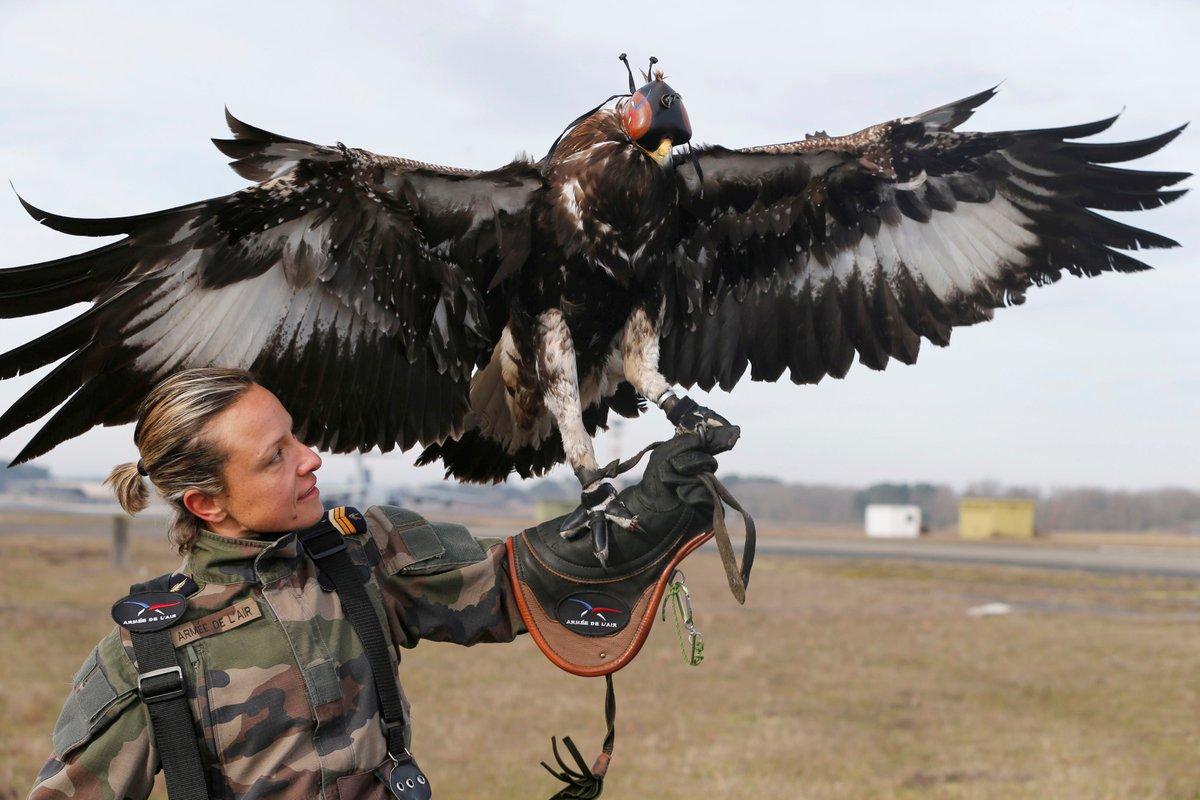 フランス空軍の鷹匠(ドローン狩り)
