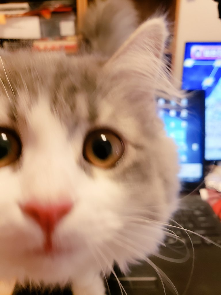 ちょっとマジで猫飼ってて、在宅勤務の人に聞きたい