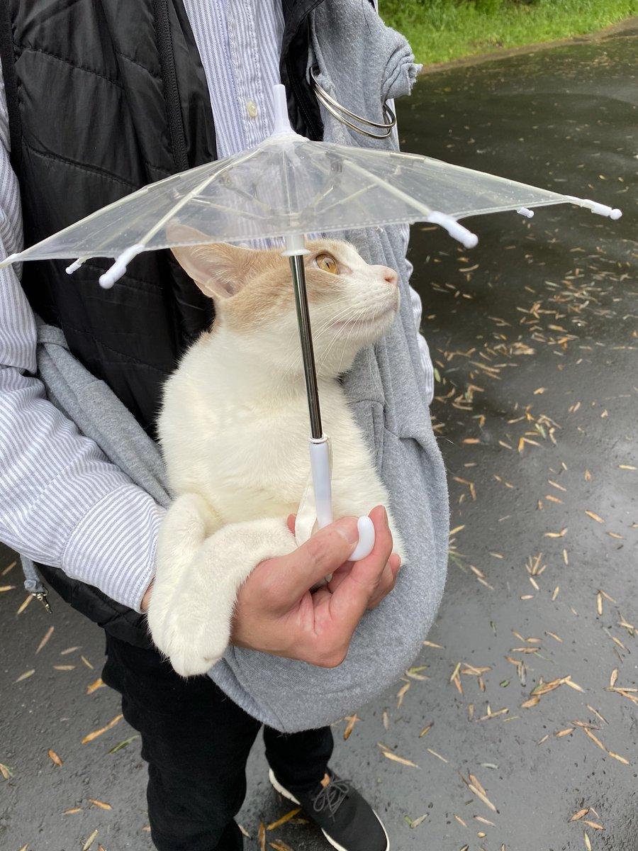 今日は雨が降ったり止んだり。それでも散歩に行きたいらしい。