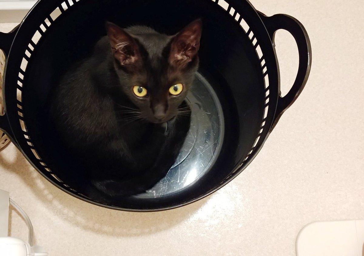 「後ろをついて歩くことは無い」と言ったものの、人間が移動すると何気なく追いかけてくる黒猫