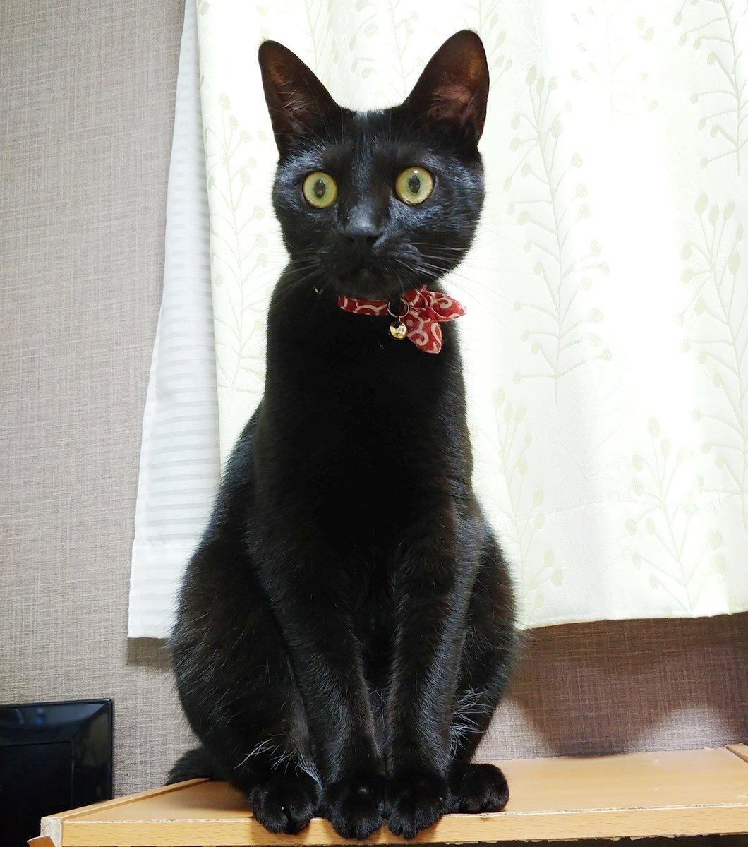 ダメ元で黒猫を「ティチャラ(黒猫の名前)だよ」と紹介したら「ティチャアア