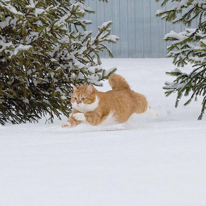 ロシアの猫、ジンジャーの日常   もともと野良猫だったジンジャー