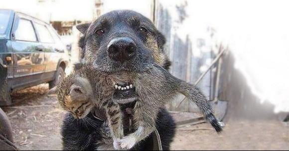 ある一家では家族を避難させ、犬も自由にさせたが猫が見つけることができぬまま外へ避難