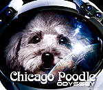 Chicago Poodle | ODYSSEY