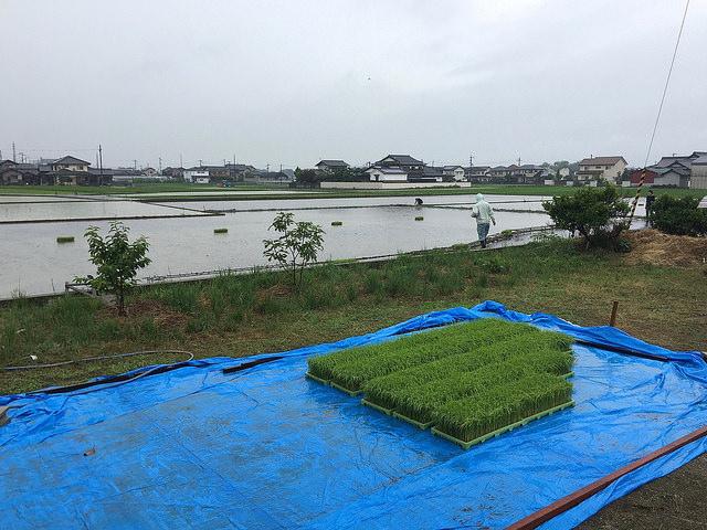 田植え準備万端の水田
