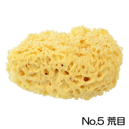 ホルベイン 天然海綿 No.5(荒目)
