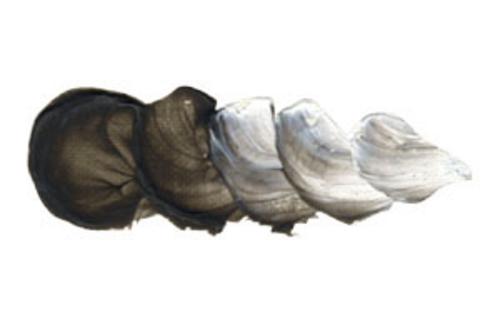 ホルベイン 油絵具6号(20ml) H825 [透明カラー]ブラック