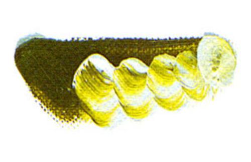 マツダ 専門家用油絵具6号(20ml) 147 オリーブグリーン