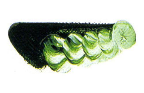 マツダ 専門家用油絵具6号(20ml) 37 サップグリーン