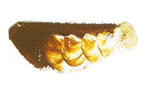 マツダ 専門家用油絵具9号(40ml) 83 ローシェンナー