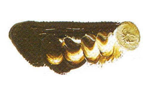 マツダ 専門家用油絵具6号(20ml) 115 ローシェンナーダーク