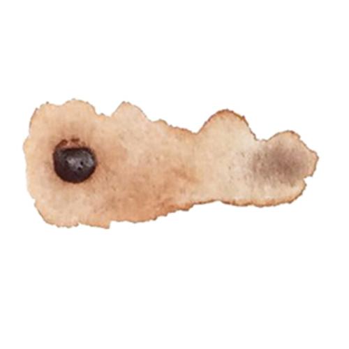 シュミンケ ホラダム水彩絵具ハーフパン 651マルーンブラウン