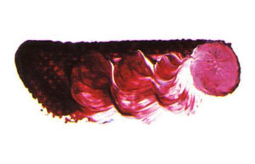マツダ スーパー油絵具6号(20ml) 1508 カーマインレーキ