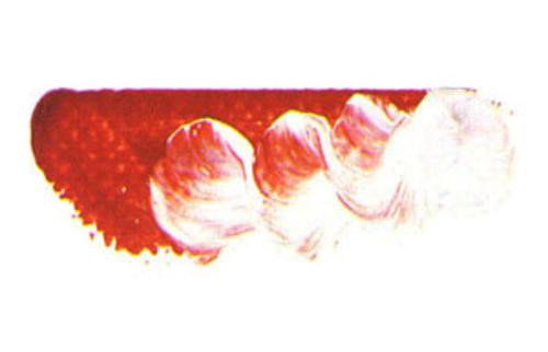 マツダ スーパー油絵具6号(20ml) 1513 ローズドレ