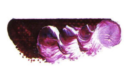 マツダ スーパー油絵具6号(20ml) 1520 スーパーガーネット