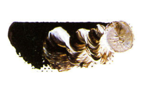 マツダ スーパー油絵具6号(20ml) 1606 セピア
