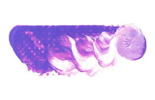 マツダ スーパー油絵具6号(20ml) 1110 コバルトバイオレット