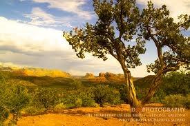 生命の木を育む・プロキョウイク者養成ワークショップ