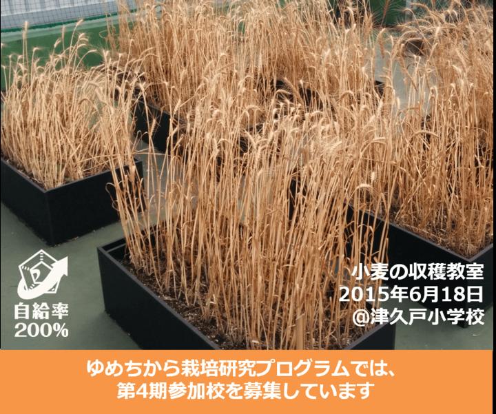 【無料教員研修会】授業で活用できる栽培研究!参加者募集!!