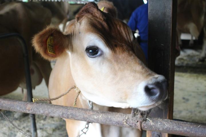 酪農を通して子どもの学びの広がりを考える(酪農教育ファーム研修会)参加費・宿泊費無料