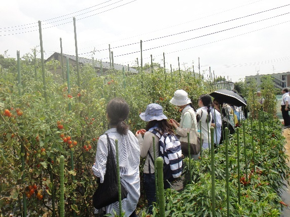 都内小学校教職員向け環境教育研修会「食べ物の旬とフードロスを考える」