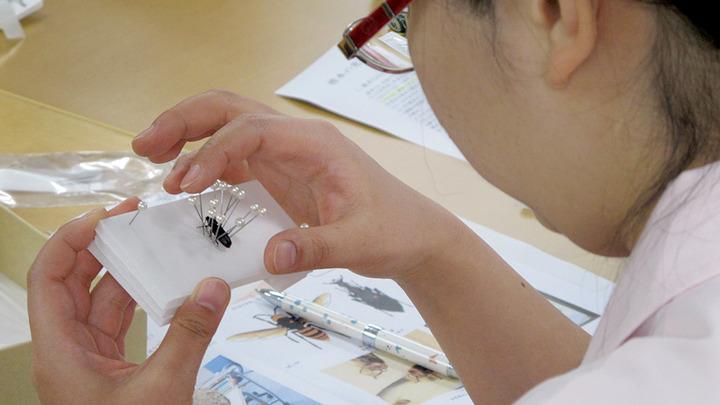 理科の先生や自然が好きな先生のための…大人も子どもも夢中!「昆虫・生きもの標本」作製 初級講座(Ⅰ~Ⅲ) ~3つの標本作成法を1日で学べます~