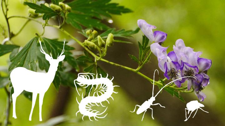 危険生物対策 講座 Ⅱ マダニ・ヒル・ムカデ/ウルシ・トリカブト・キョウチクトウほか危険な動植物を学ぶ【2月開催:危険生物対策アドバイザー認定講座】