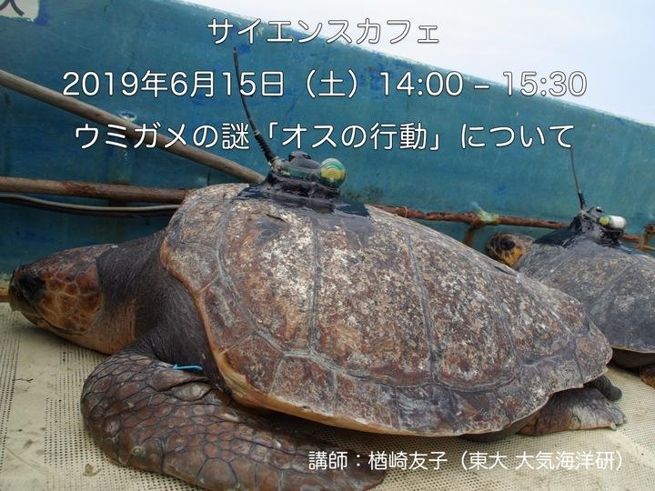 オスのウミガメは何をしてる?〜実は知らない産卵場以外の生態〜  (講師:楢崎友子,東京大学大気海洋研究所)「サイエンスカフェ −まだわかっていないこと−」