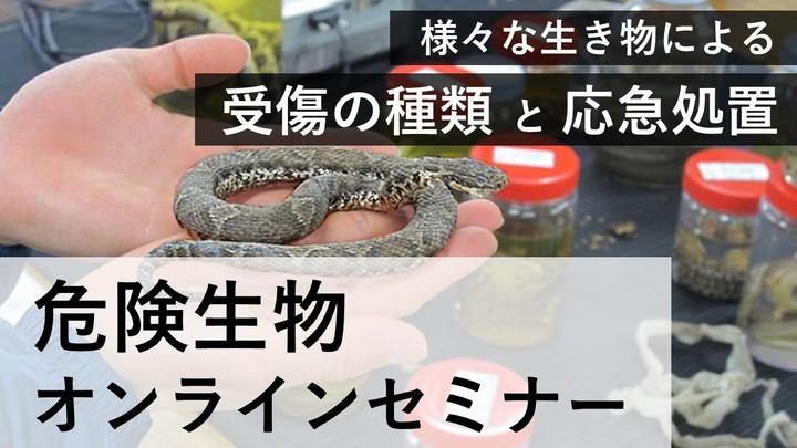 11/8(日) 危険生物オンラインセミナー ~『受傷の種類』と『応急処置』