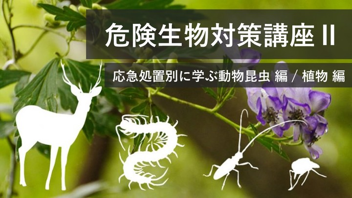 3/21(日) 応急処置別に学ぶ! 危険生物対策 講座 Ⅱ 動物昆虫編&植物編 【危険生物対策アドバイザー資格認定】