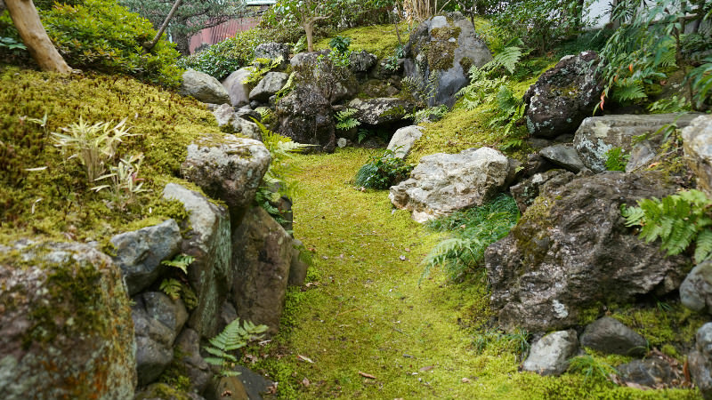 Walking Through The Path With Moss