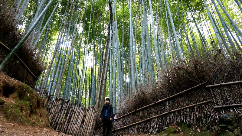 在竹林中拍張照